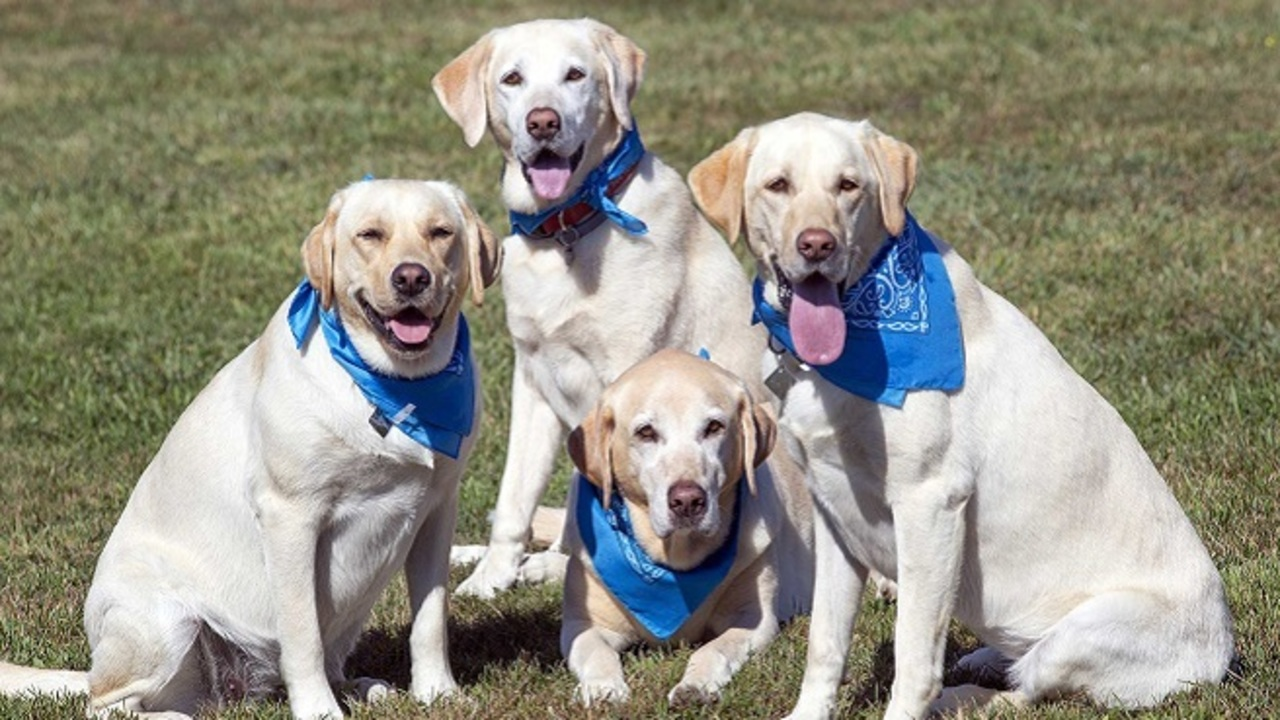 Heart & Sole Walk For Animals kicks off in Portsmouth