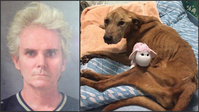 Man facing additional charges in animal cruelty case
