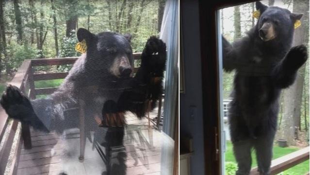 Bear visits Connecticut woman's home while she's baking