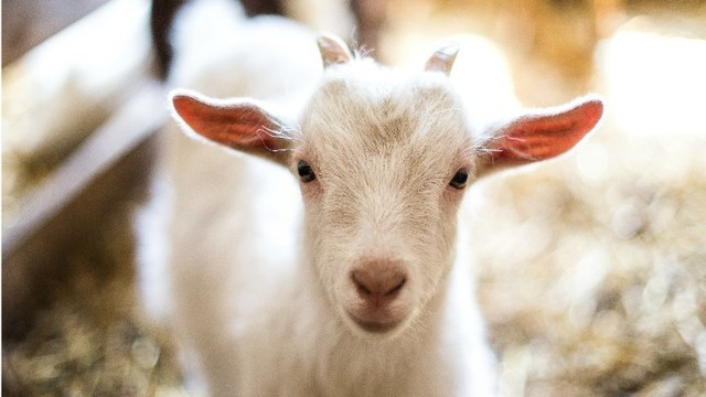 dem issues quarantine on middletown petting zoo