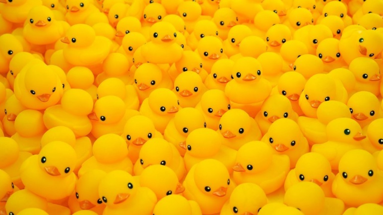 20k rubber ducks expected to float down pawcatuck river in annual race