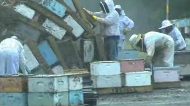 Truck carrying 30 million bees overturns in Texas