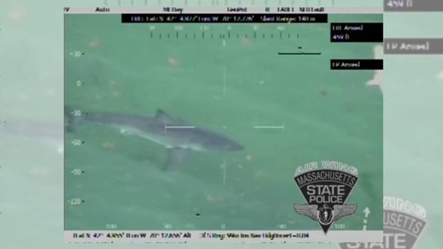 Great white shark seen attacking seal at Provincetown beach