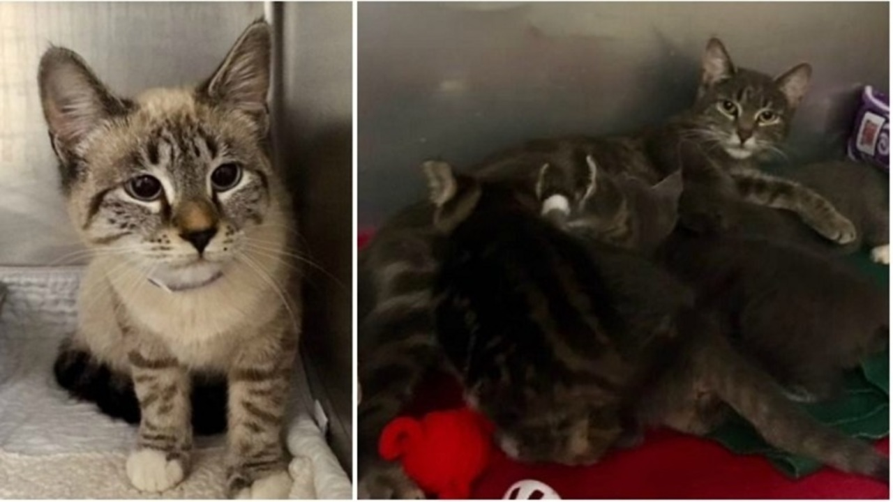 Providence Animal Control: Bag thrown from car with cats inside