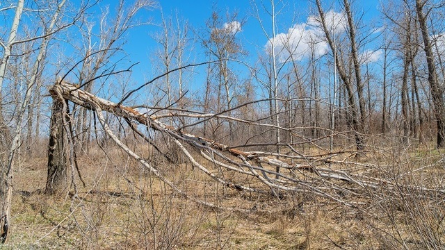 State: About 13 percent of Rhode Island forest trees dead